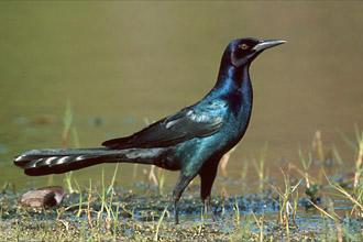 Sulekha's High Flying Birds Part 2 | Sulekha Creative  Sulekha's H...